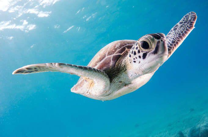 Programa de voluntariado con tortugas en Estados Unidos