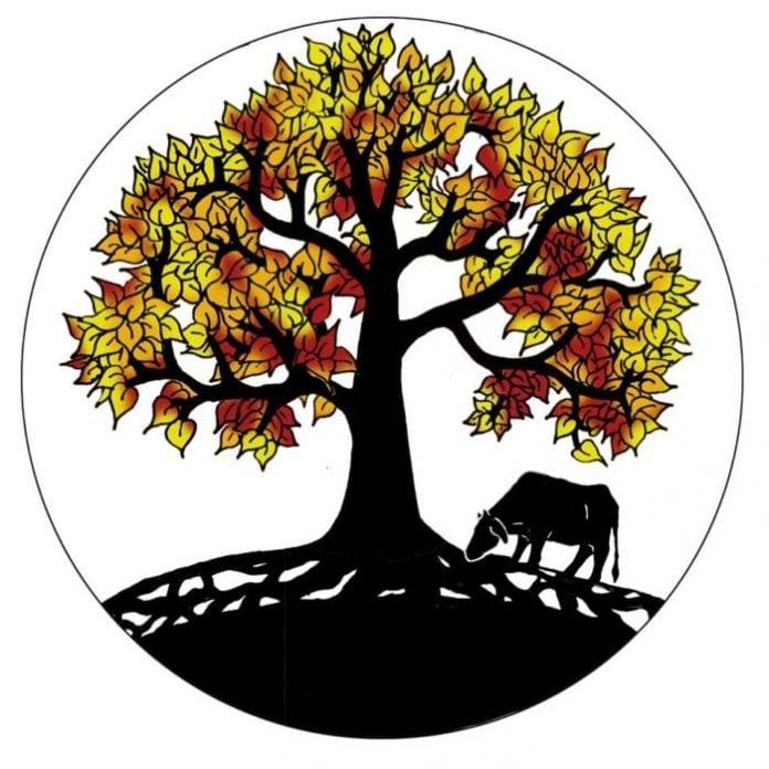 Peepal Farm, voluntariado en India para veterinarios y cineastas