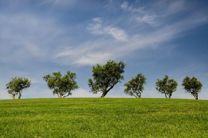 Curso online en español, Medio Ambiente Fondo Verde, OEA